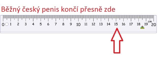 prumerna velikost penisu