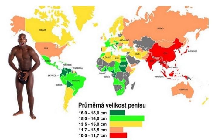Průměrná velikost penisu u mužů