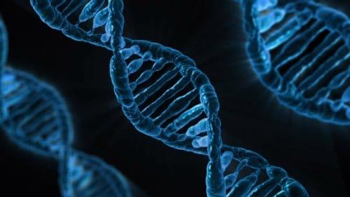 genetická velikost penisu
